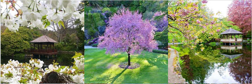 Spring in Victoria BC