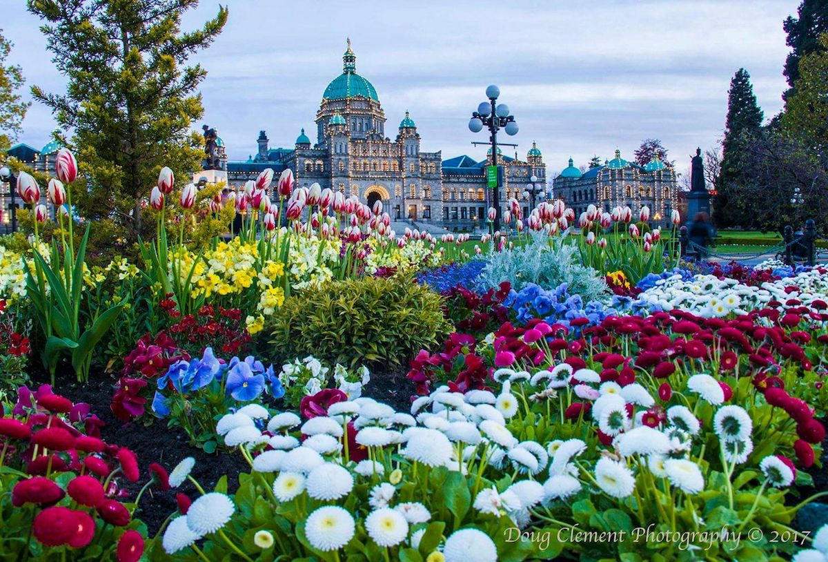 About Victoria Victoria Flower Count